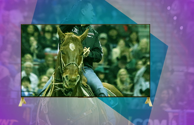 watch NFR online streaming